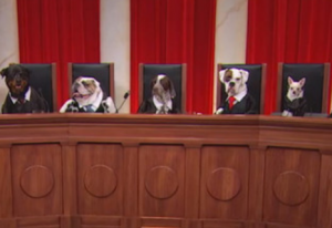 Supreme Court Dogs